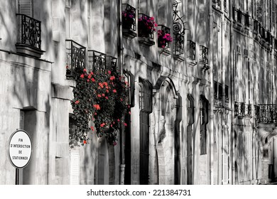 Colorful flowers against a typical row of windows in black and white of quaint houses along the river Seine bank in Paris, capital of France catching the first sunlight of the day at dawn