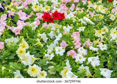 the colorful Flowers -Background with the Flowers
