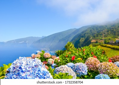 Colorful flowers and beautiful northern coast of Madeira Island, Portugal. Typical Hydrangea, Hortensia flowers. Amazing coastal landscape by Atlantic ocean. Selective focus, blurred background