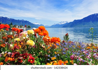 Colorful flowers in bloom, lake water and blue sky background