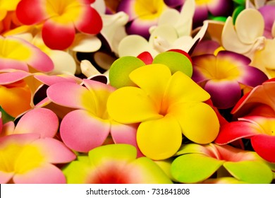 Royalty Free Colorful Flowers Images Stock Photos Vectors