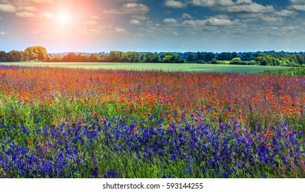 colorful flowers in the field in sunny day. wonderful summer landscape. nature background with sky and sun over the field. retro vintage style. instagram filter