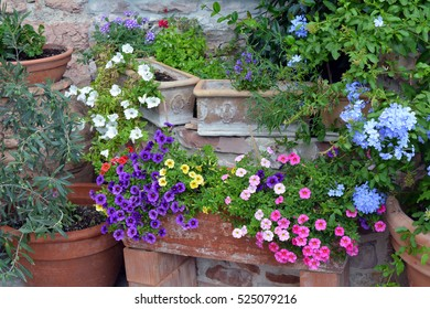 Colorful flowers in flower pots