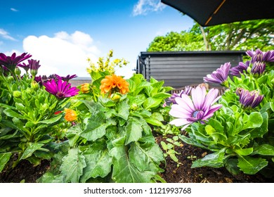 Colorful flowers in a flowerbed on a terrace in a garden with blue sky in the background