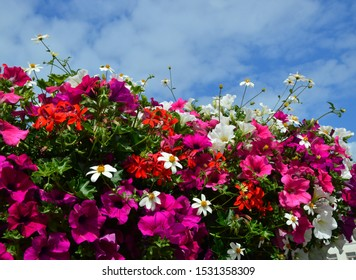colorful-flowers-front-cloudy-sky-260nw-
