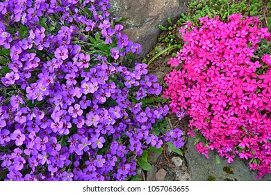 Colorful flowers in the garden
