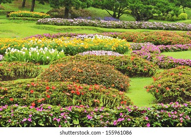 Colorful flowers in the garden.