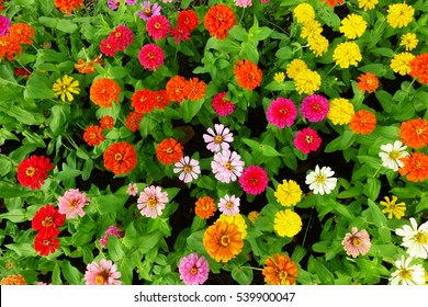 Colorful flowers in garden