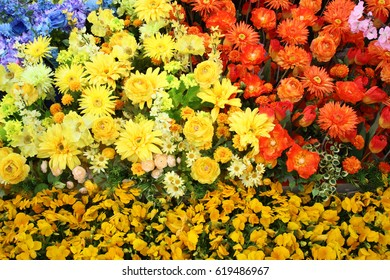 Colorful flowers in the garden background