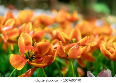 Colorful flowers in garden. The background image of the colorful flowers.