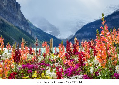 Colorful flowers with the glacier and Lake Louise in the background at Lake Louise, Banff National Park, Alberta, Canada.