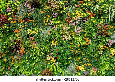 Colorful flowers and green wall
