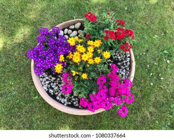 Colorful flowers inside flowers pot, on a green lawn.