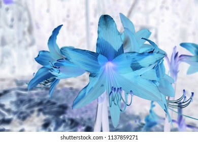 Colorful flowers in negative design