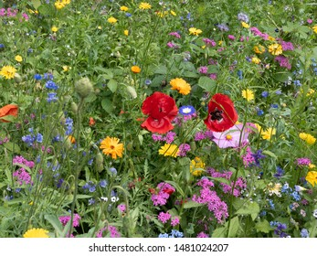 Colorful flowers on a field in summer