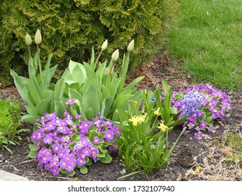 Colorful flowers on the flower bed