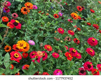 Colorful flowers on garden in spring