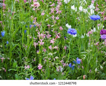 Colorful flowers on the meadow - idyllic atmosphere