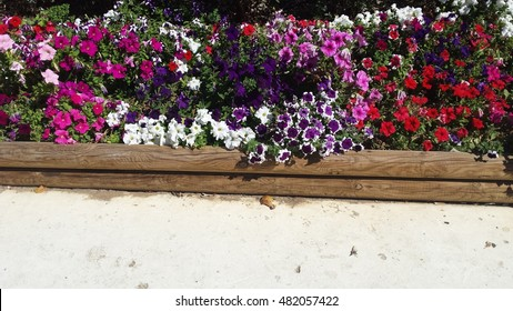 Colorful flowers on the park.