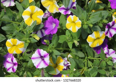 Colorful flowers on a warm summer day.