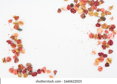 Colorful flowers on a white background