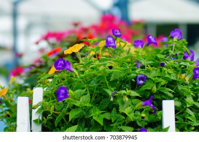 Colorful Flowers in a Planter in Charlotte, North Carolina.