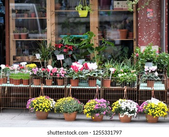 Colorful flowers in pots in flower shop