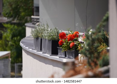 colorful flowers in pots on balcony or loggia fence, railing decoration in city. Colorful pots with flowers outdoors. Flower bed with red flowers on window sill, exterior decoration