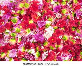 Farbige Blumen Rot-Blau-Weiß-Lila, Nahaufnahme.