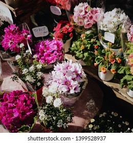 Colorful flowers for sale. Home decoration.
