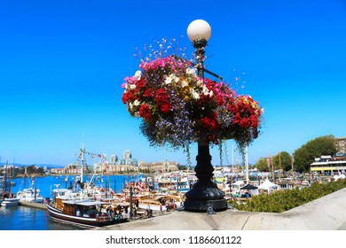 Colorful flowers in Victoria, Capital city of British Columbia, Island, BC, Victoria, evergreen