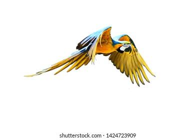 bunter Fliegenpapagei einzeln auf weißem Hintergrund (unscharfes Foto)