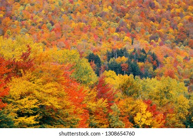 Colorful foliage abstract background in White Mountain, New Hampshire.