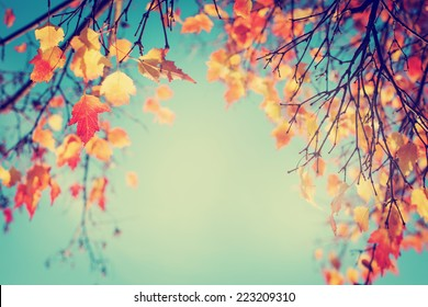 Colorful foliage in the autumn park/ Autumn leaves sky background/ Autumn Trees Leaves in vintage color