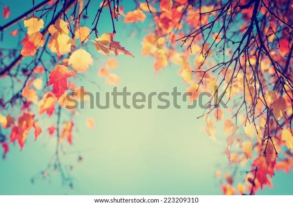 Kleurrijk gebladerte in het herfstpark/Herfst bladeren hemel achtergrond/ Herfst Bomen Bladeren in vintage kleur
