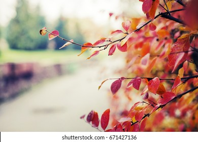 Colorful foliage in the autumn park/ Autumn trees leaves city background