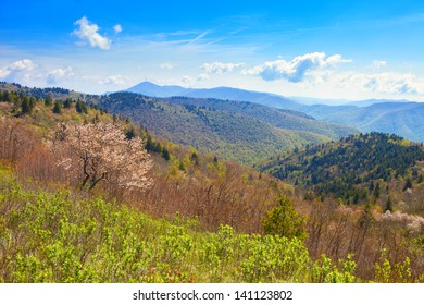 colorful foliage and flowers in great smoky mountains