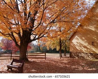 Colorful Foliage in Historic Old Salem, Winston Salem, NC