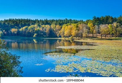 Colorful forest by the lake. Bass Lake with floating lily pods in autumn forest. Copy space. Moses Cone Memorial Park, Blowing Rock, near Blue Ridge Parkway, North Carolina, USA.