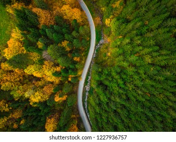 Colorful forest and curvy road, aerial drone view from above.