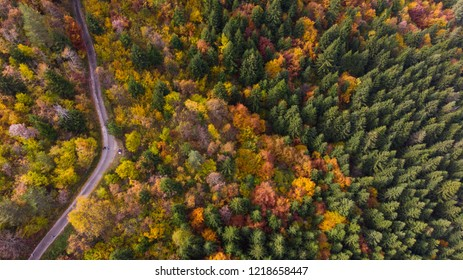 colorful forest drone shoot