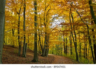 Colorful forest during fall