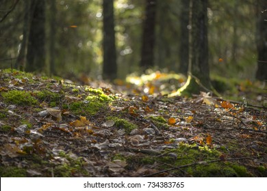 Colorful forest floor with vivid autumn leaves and backlight. Sweden