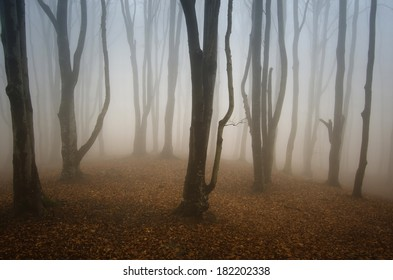 colorful forest with fog