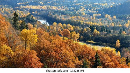 Colorful forest hills in fall. Sigulda, Latvia.