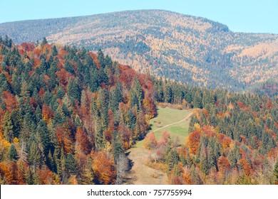 Colorful forest on slope. Autumn Carpathian Mountains landscape (Ivano-Frankivsk oblast, Ukraine).