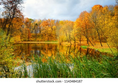Colorful forest scene in the fall with orange and yellow foliage. Autumn city park scenery in Vilnius, Lithuania.
