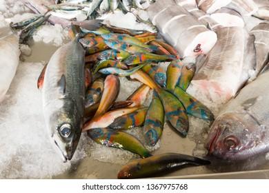 Colorful fresh fish on ice