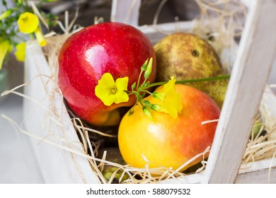 Colorful fresh red yellow apples pears in vintage wood box on straw, yellow flower, kitchen table outdoor in garden, summer spring time, top view, close up