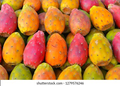 Colorful fruit of the Prickly pear Cactus in Sicily, Italy